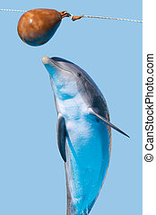 Bottlenose dolphin jump (isolated on the blue background)