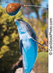Bottlenose dolphin jump