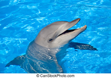 Bottlenose Dolphin - A happy Bottlenose Dolphin laughing and...