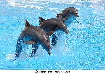 bottlenose, springen, delphine, drei