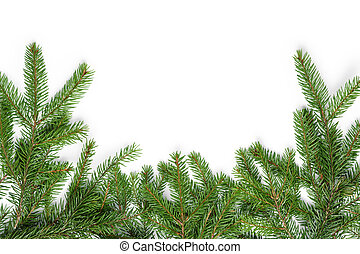 bottom border from fir twigs