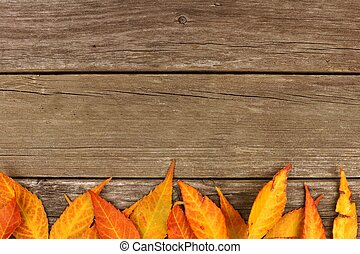 Bottom border of colorful autumn leaves on wood