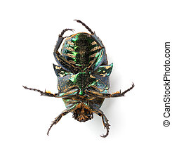 bottom of a glossy bettle on a white background close up