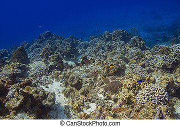 Bottom of sea coral reef