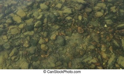 Bottom of the river is seen through water. small fish swim in a shallow stream of a creek