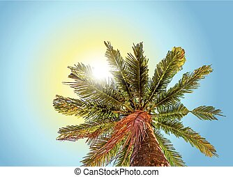Bottom-up view of a beautiful palm tree with blue sunny sky