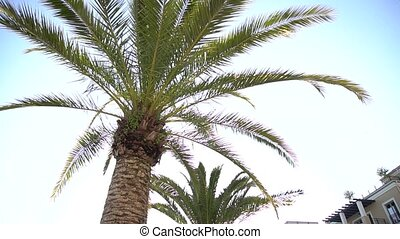 bottom view of a palm tree against the blue sky