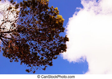 Bottom view of a red tree with clouds and blue sky in the background