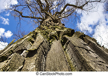 Bottom view of an old tree with a crown on the background of bright blue sky on a sunny day.