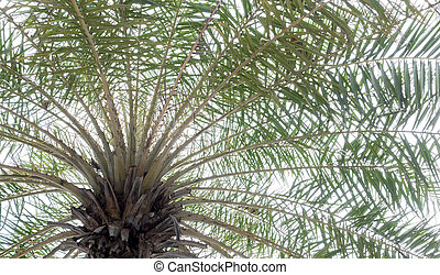 Bottom view of palm tree