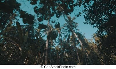 Bottom view of palm trees over summer sky - Bottom view of...