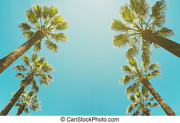 Bottom view of palm trees row