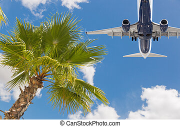 Bottom View of Passenger Airplane Flying Over Tropical Palm Trees