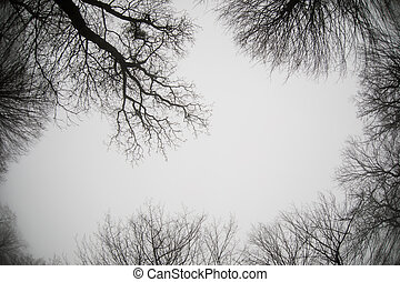 Bottom view of tall old trees in winter forest Blue sky in background. Azerbaijan