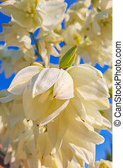 Bottom view of white flowers against a blue sky.