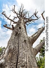 Bottom view on dead tree.