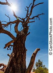 Bottom view on dry tree.