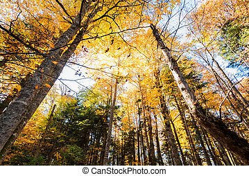 Bottom view trees in beautiful sunlit autumn forest