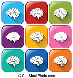 bottoni, cervello, organo