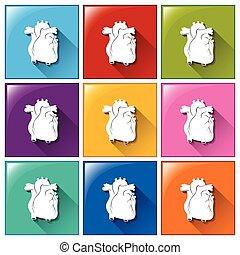 bottoni, cuore, organi