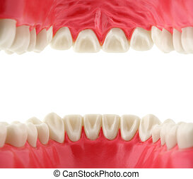 bouche, intérieur, dents, vue