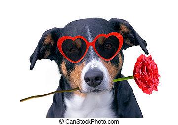 bouche, valentines, chien, rose, amour