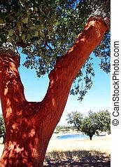 bouchon, arbre, portugal, coffre