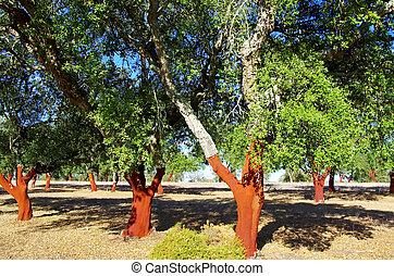 bouchon, dépouillé, arbres