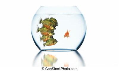 boucle, 3840x2160, ultra, assommé, piranhas, 3d, hd, seamless, beau, fond, blanc, 4k, poisson rouge, conceptuel, dit, rigolote, animation, reflet, brouillé, quelque chose