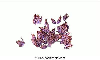 boucle, voler, seamless, papillons