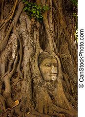 bouddha, pierre, arbre, tête, racine