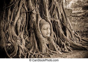 bouddha, tête, arbre