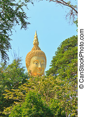 bouddha, tête, arbre, stand