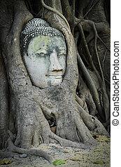bouddha, tête, coffre, arbre