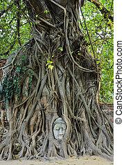 bouddha, tête, tronc arbre