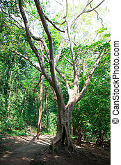boue, arbre, racines