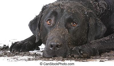 """Résultat de recherche d'images pour """"chien sale"""""""