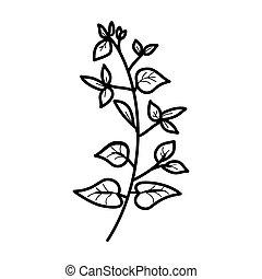 Bougainvillea Floral Hand Drawn. Vector Design Illustration Sign Logo.