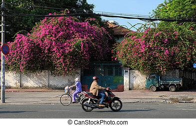 bougainvillea flowers trellis - Amazing house with...