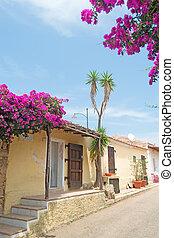 bouganvillea by the street - flowers by the street in San...