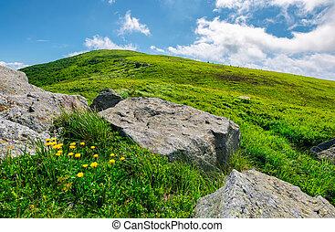boulder around dandelions on grassy hillside. beautiful...