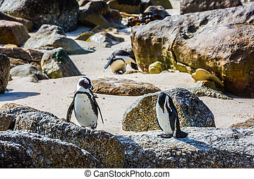 Two penguins on sand and stones