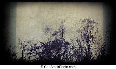 bouleau, effrayant, arbres, regarde