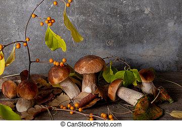 bouleau, studio, leaves., automne, frais, composition, porcini, artistique, concept., baies, arrière-plan., baissé, gris, orange, champignons, branche, coup