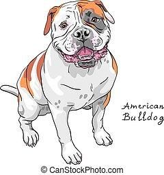 bouledogue, américain, race, vecteur, croquis, chien