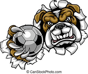 bouledogue, football football, mascotte