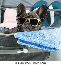 bouledogue, francais, lunettes
