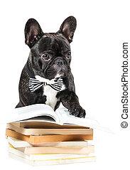 bouledogue, livres, francais
