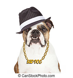 bouledogue, mauvais chien