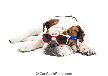 bouledogue, porter, américain, lunettes soleil, themed
